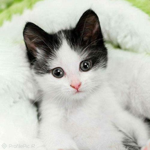 عکس پروفایل گربه زیبا و ناز