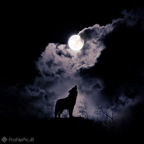 عکس پروفایل گرگ سیاه
