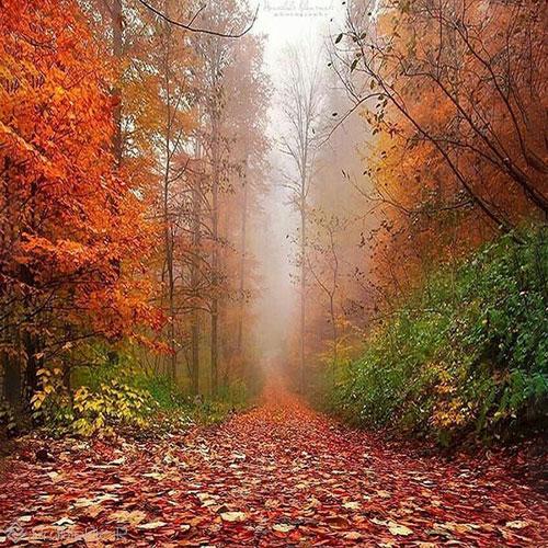 عکس پروفایل زیبا از جنگل پاییزی