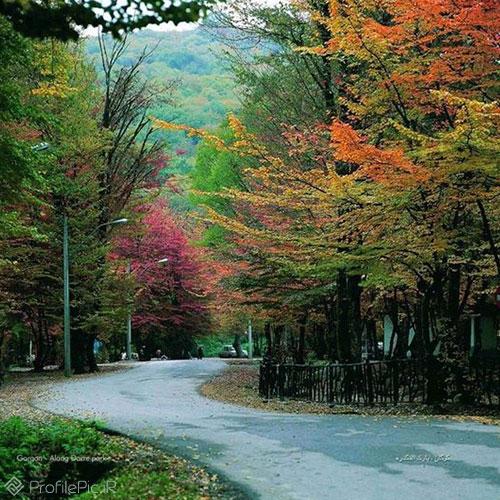 عکس جنگل پاییزی برای پروفایل