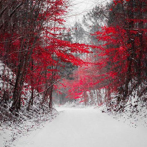 عکس پروفایل روز برفی در طبیعت زمستان زیبا
