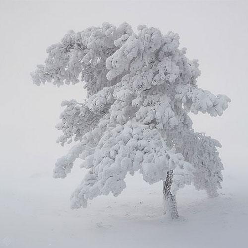 عکس پروفایل زیبا از روز برفی