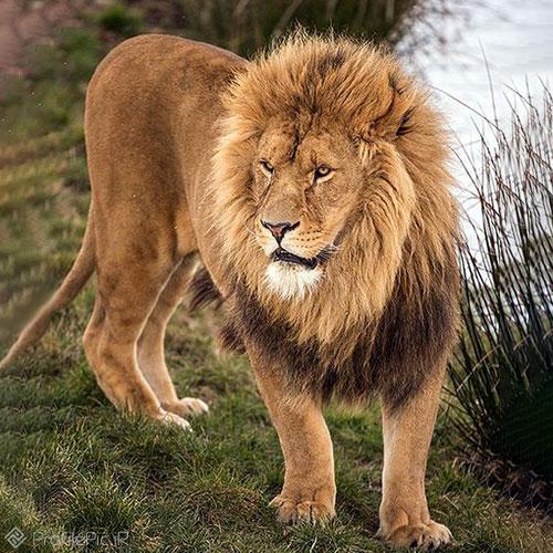 پروفایل سلطان جنگل