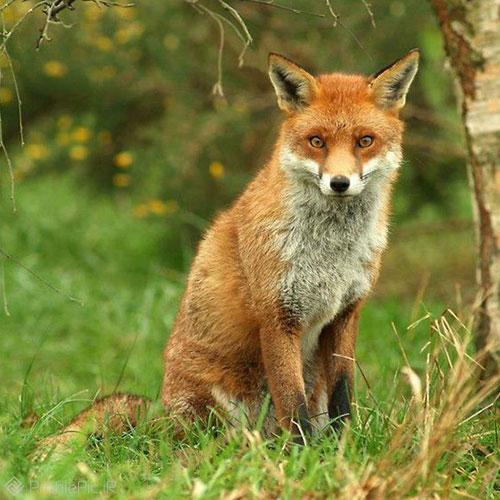 عکس جالب از حیوانات وحشی