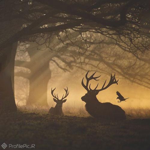 گوزن در جنگل وحشی