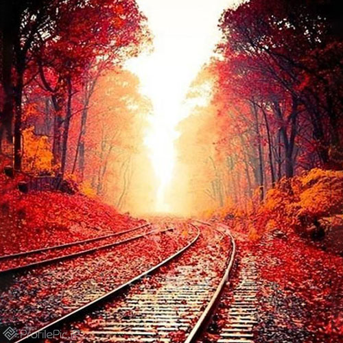 عکس ریل قطار در پاییز