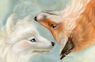 عکس روباه سفید