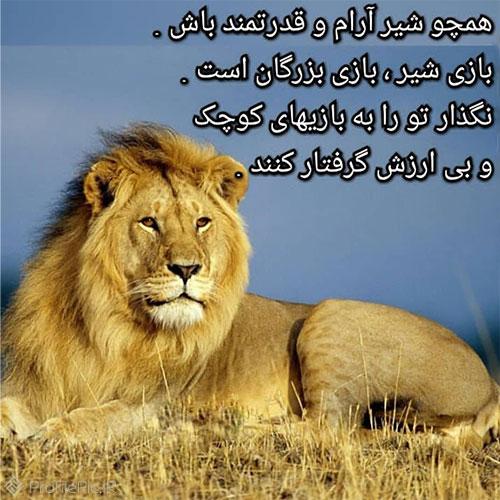 عکس نوشته زیبا و جالب