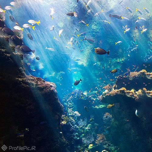 عکس زیر دریا برای پروفایل