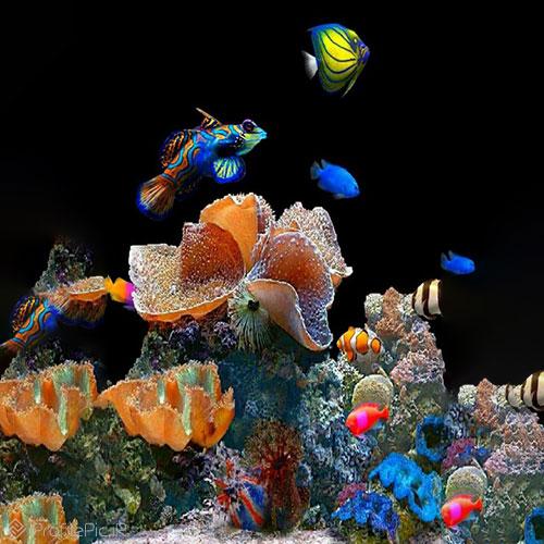 عجایب زیر دریا