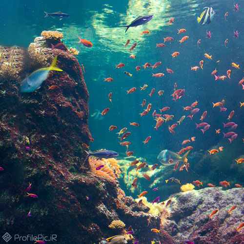 پروفایل موجودات زنده در زیر دریا