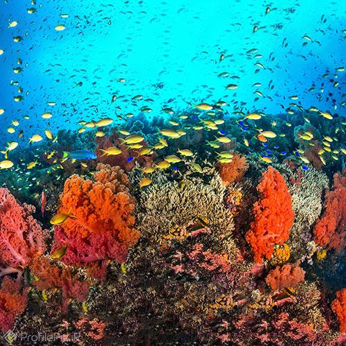 عکس پروفایل زیر دریا