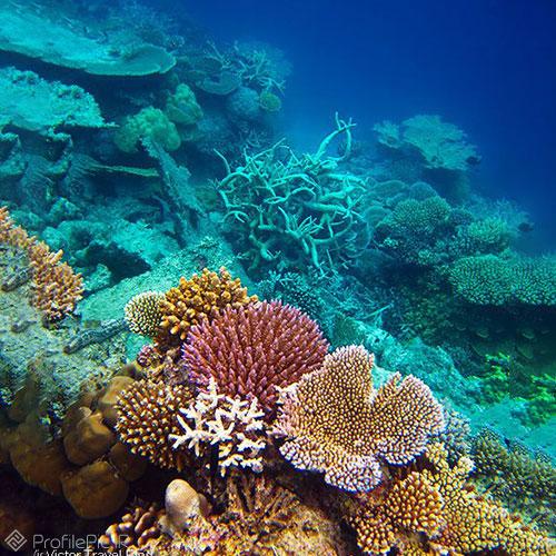 عجایب دیدنی از زیر دریا