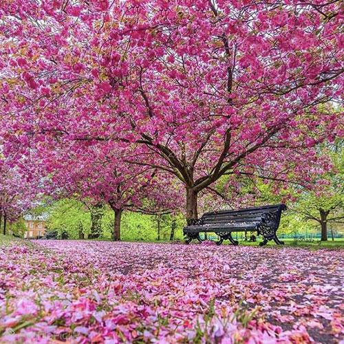 عکس بهاری زیبا و خاص برای پروفایل