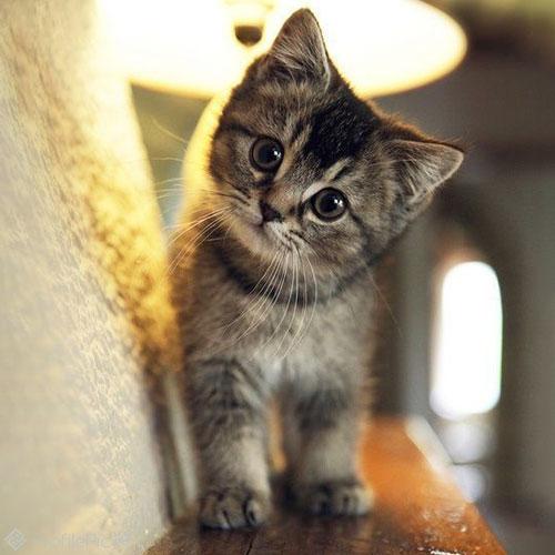 عکس پروفایل گربه زیبا و ناز - پروفایل پیک