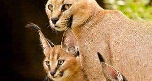 پروفایل زیبا از حیوانات وحشی