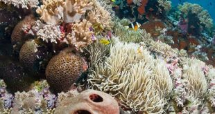 زندگی در زیر دریا