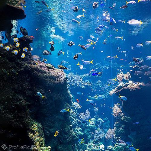 ماهی های زیر دریا