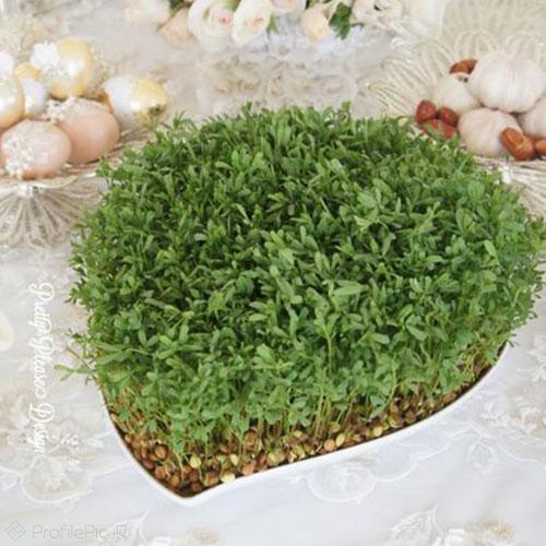 مدل زیبا از سبزه عدس برای پروفایل